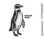african spectacled penguin.... | Shutterstock .eps vector #1770330287