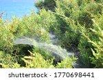 Large Fluffy Spider Web In Bush