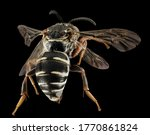 Extreme close up photo of bee...