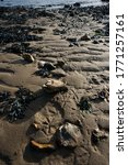 Detail Of Beach Shoreline With...