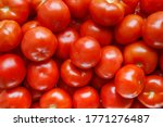 ripe red tomatoes vegetables... | Shutterstock . vector #1771276487