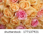 Beautiful Yellow And Pink Roses ...
