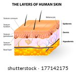 ������, ������: Melanocyte and melanin layers