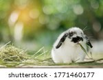 Rabbit Eating Grass With Bokeh...