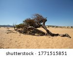 View Of A Juniper Tree In The...