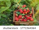 Full Fresh Strawberry Basket....