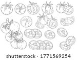 tomato set. whole and half cut... | Shutterstock .eps vector #1771569254