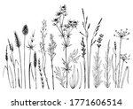set of wild meadow herbs and... | Shutterstock .eps vector #1771606514