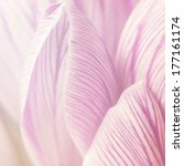 Crocus Petals Texture