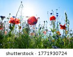 Colorful natural flower meadows ...