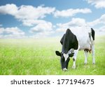 cows in green field under blue... | Shutterstock . vector #177194675
