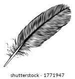 B W Feather. Quill  Pen ...