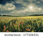 Poppy Flowers In A Wheat Field. ...