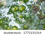 Green Mold Background. Mold On...