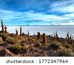 Cactus Island Isla Incahuasi is a hilly and rocky outcrop of land and former island in  Salar de Uyuni, Bolivia. A paradise for cacti. This hilly outpost is covered in Trichocereus cactus.