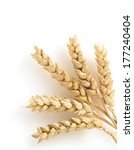 Ears Of Wheat Isolated On Whit...