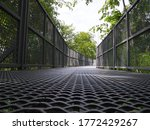 The Canopy Walkway Visit Many...