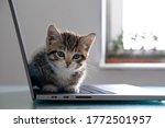 Small Striped Kitten Sitting On ...