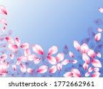 pink sakura petals confetti... | Shutterstock .eps vector #1772662961
