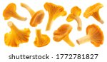 Raw Fresh Chanterelle Mushrooms ...