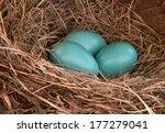 Three Blue Robin Eggs In A Nest