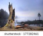 Ancient Oak Tree Hit By...