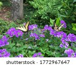Summer Butterflies On Homestea...