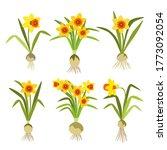 Set Of Yellow Daffodils....