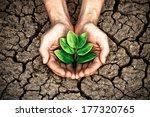 hands holding tree growing on... | Shutterstock . vector #177320765
