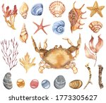 Watercolor Seashells Clipart....