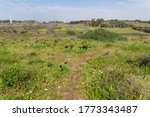 Nature reserve with blooming purple irises (Iris atropurpurea) and other spring wild flowers. Israel