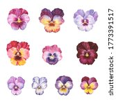 pansy flowers  colorful... | Shutterstock . vector #1773391517