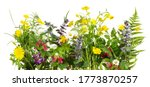 Wild Meadow Flowers Panorama...