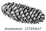 fir cone | Shutterstock . vector #177393617