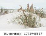 Dune Landscape At The North Sea ...