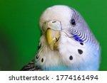 Bird With Cracked Beak  Cracke...