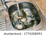 Live Blue Crabs In The Kitchen...