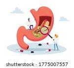 gastroenterology doctor... | Shutterstock .eps vector #1775007557
