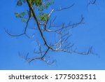 View Of Dry Twigs On Tree In...