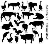 black set silhouettes  zoo... | Shutterstock .eps vector #177506549