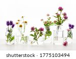 Summer Wild Medical Flowers An...