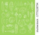 set of outline vegetables on... | Shutterstock .eps vector #1775128754