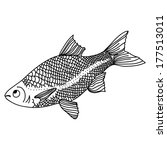 black and white outline fish. a ... | Shutterstock .eps vector #177513011
