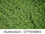 Background Of Green Thick Grass.