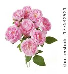 rose flowers bunch isolated on... | Shutterstock . vector #177542921