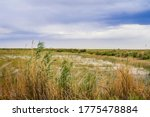 Steppe In The Summer. Steppe...