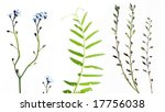 three different types of flora...   Shutterstock . vector #17756038