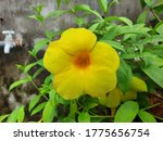 a image of yellow flower with... | Shutterstock . vector #1775656754