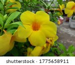 a image of yellow flower with... | Shutterstock . vector #1775658911