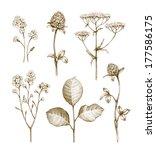wild flowers collection...   Shutterstock . vector #177586175